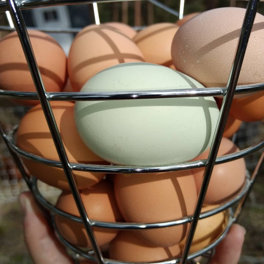 [basket of fresh eggs]