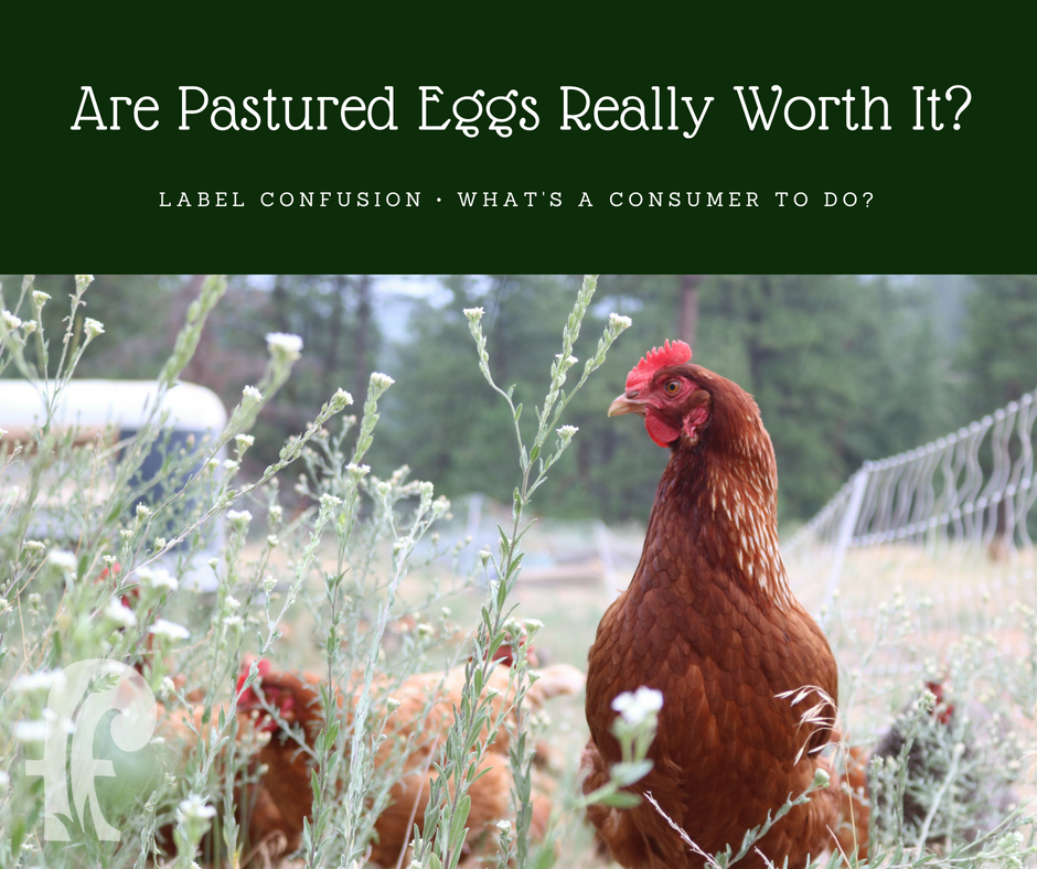 [Are Pastured Eggs Really Worth It?]