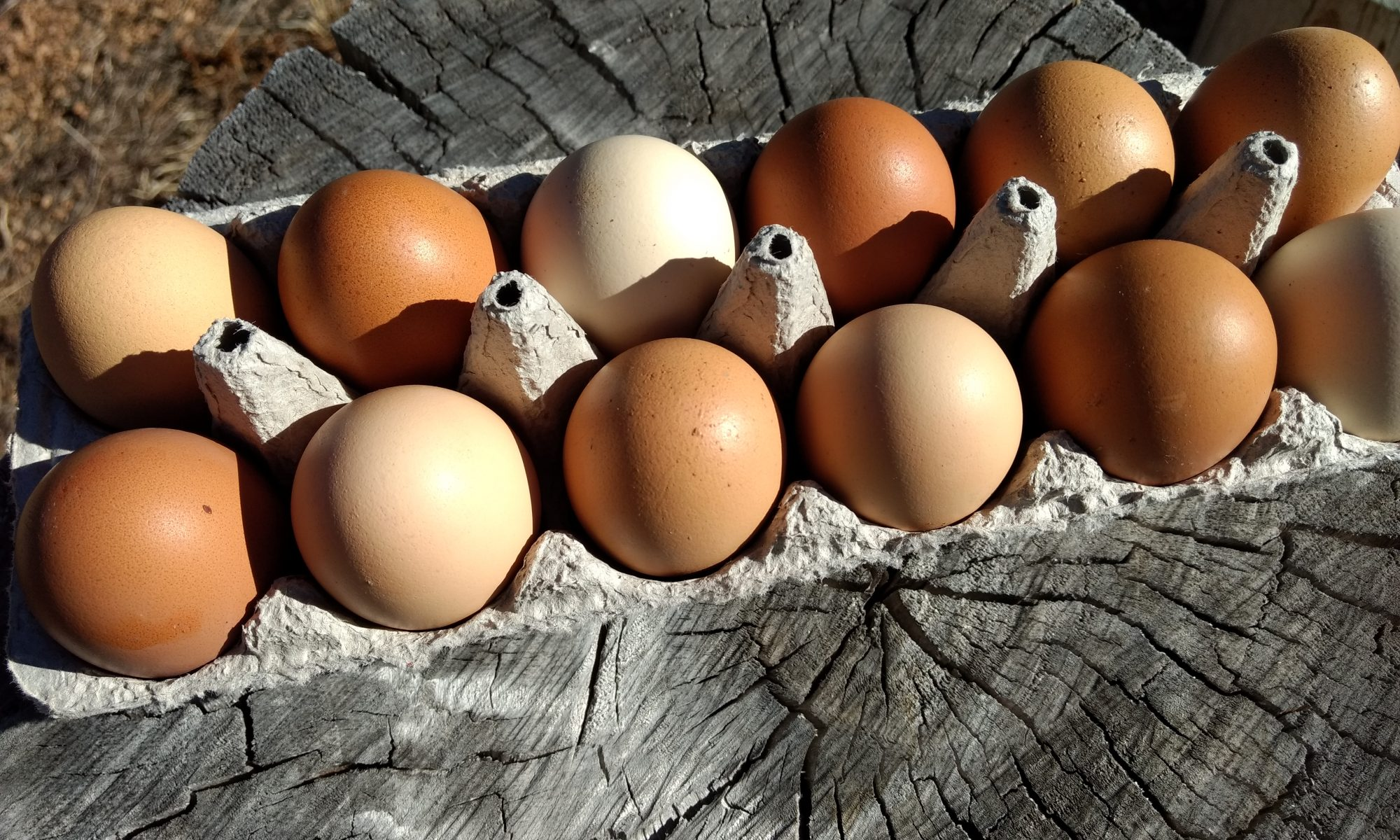 [Pastured Eggs from A Little Farm]